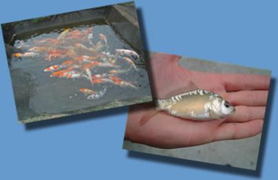 Halgazdálkodás - Agrofish